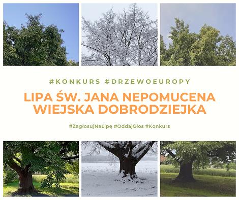 Ruszyło głosowanie na Europejskie Drzewo Roku 2021. Polskę reprezentuje Lipa św. Jana Nepomucena z Dulczy Wielkiej.